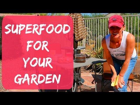 Coffee Grounds, Eggshells, Banana & Avocado Peels For The Garden As Organic Fertilizer