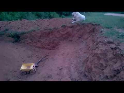 Hand dug root cellar