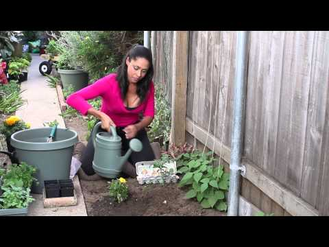 Homemade Eggshell Plant Fertilizer : The Chef's Garden