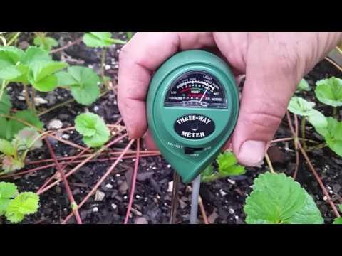 How to test soil ph easy tips to better garden
