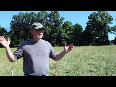 Tips for Raising Grassfed Cattle on a Small Farm