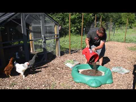 DIY How to make a Cheap All Natural Chicken Dust Bath