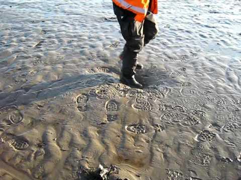 Walking on quicksand on Morecambe Bay