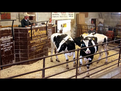 Buying and Selling at Livestock Auctions