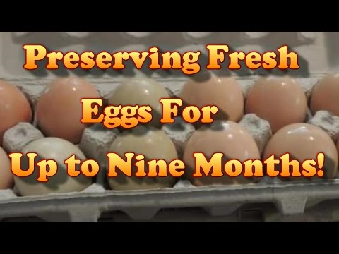 Preserving Fresh Eggs For Up To 9 Months!