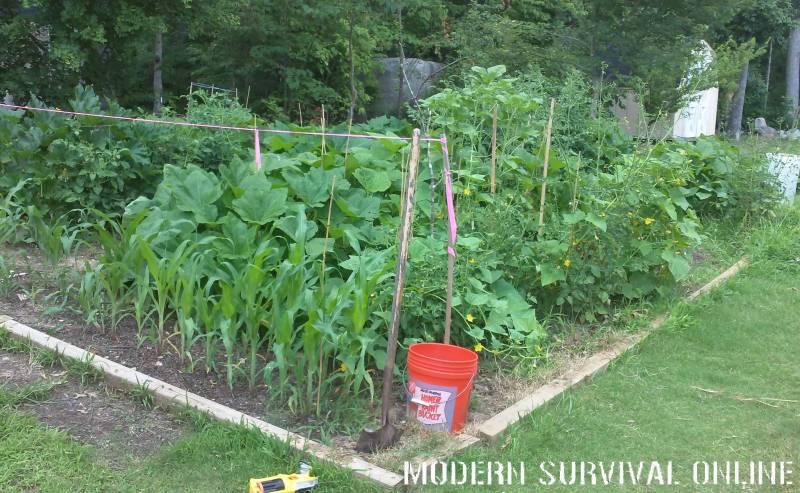 mature backyard garden