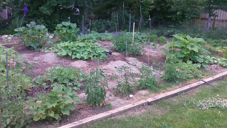 survival garden, preparedness, food storage, SHTF, TEOTWAWKI, homesteading