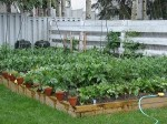 small-vegetable-garden