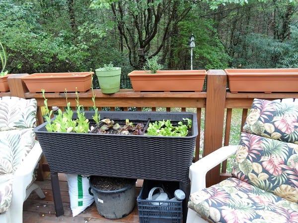 Raised Deck Bed