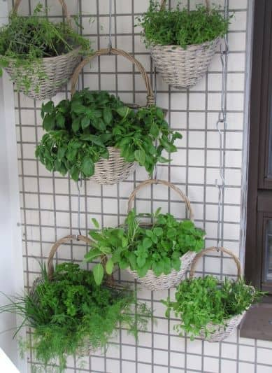 vertical pots herbs on balcony