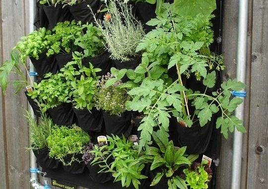 herbs growing vertically
