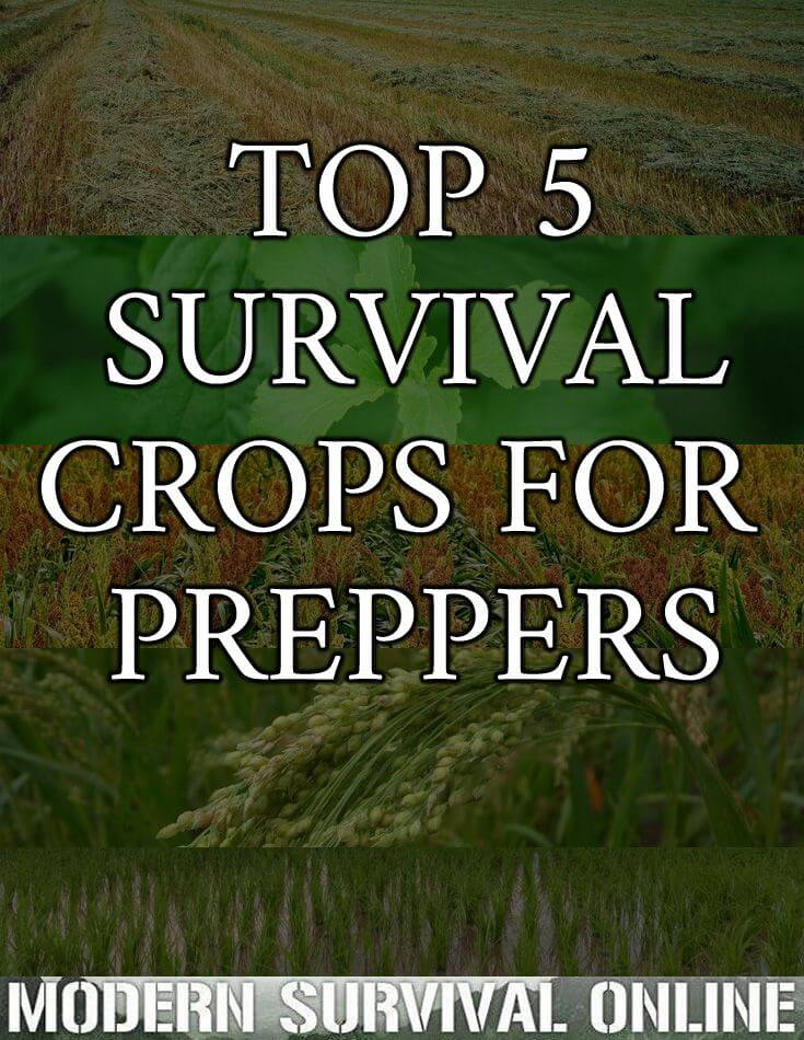survival crops pinterest image