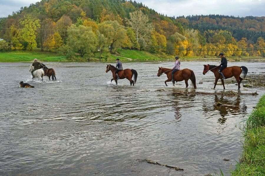 horses crossing water
