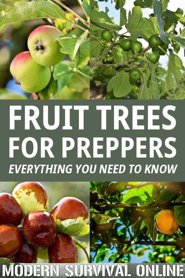 fruit tree for preppers pinterest