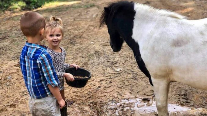 kids feeding mini horses