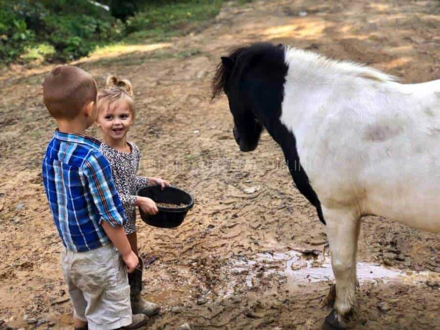 kids feeding mini horses