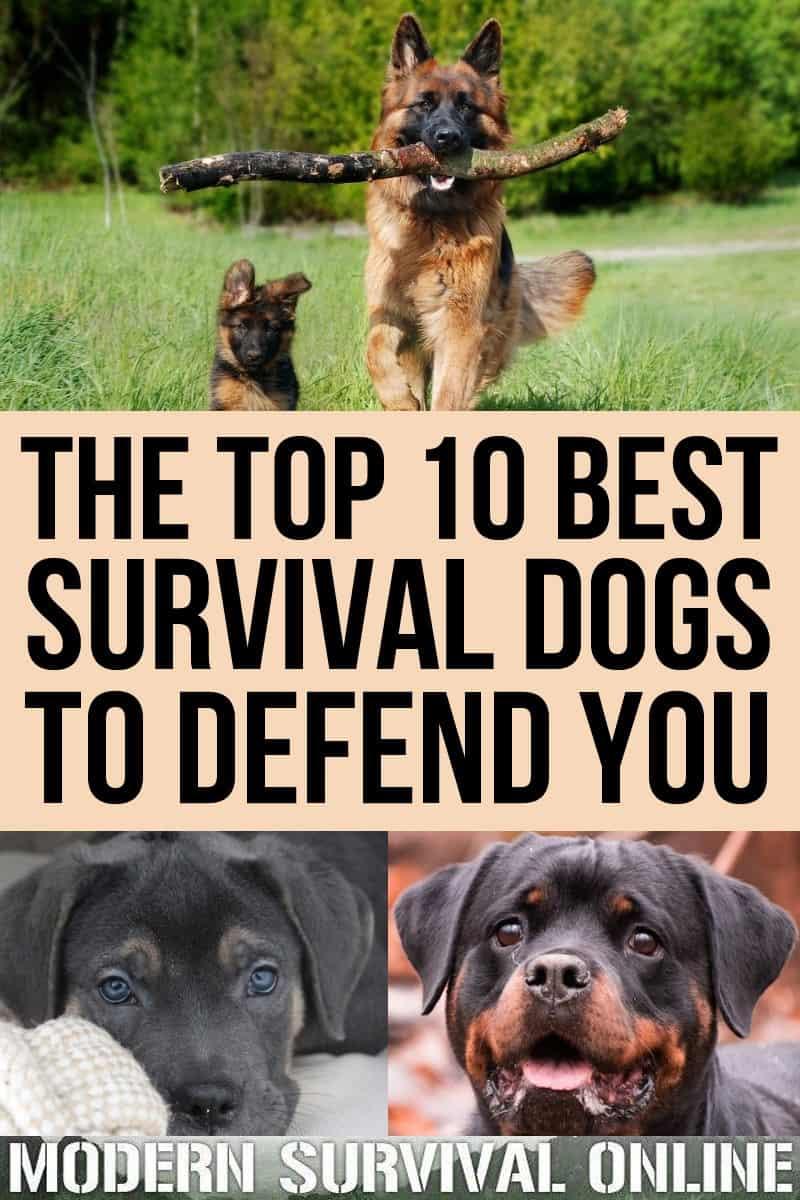 survival dogs pinterest