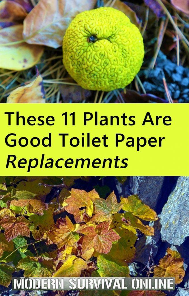 toilet paper plants pin