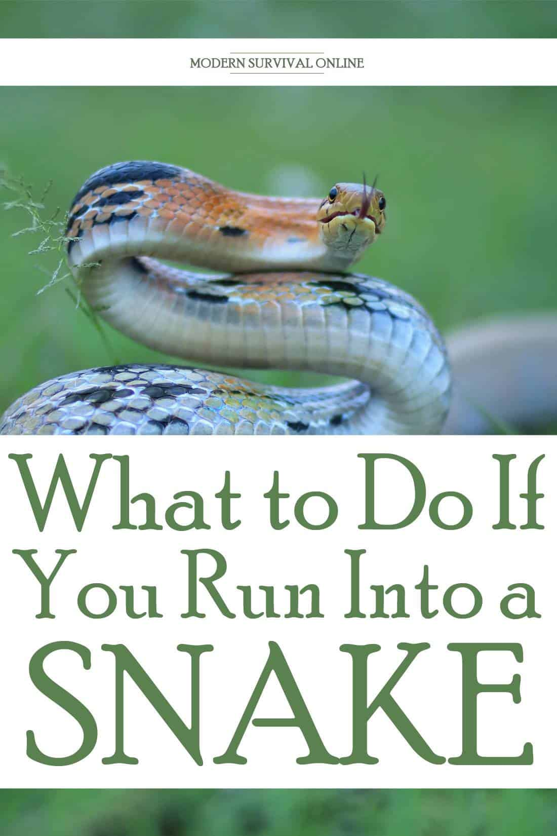 dealing with snakes pinterest