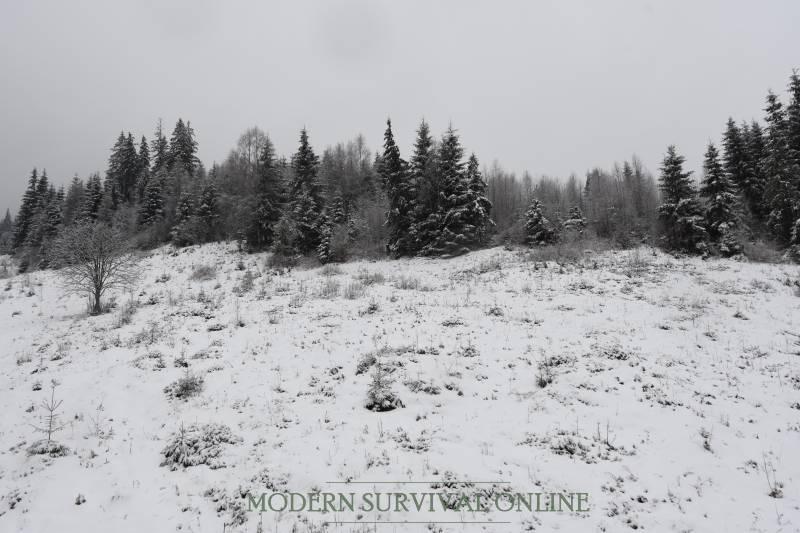 fir trees on mountain